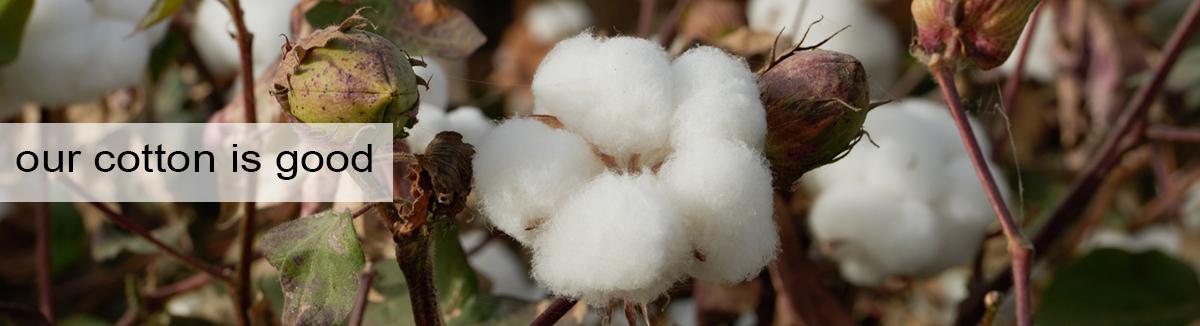Dennys Cotton